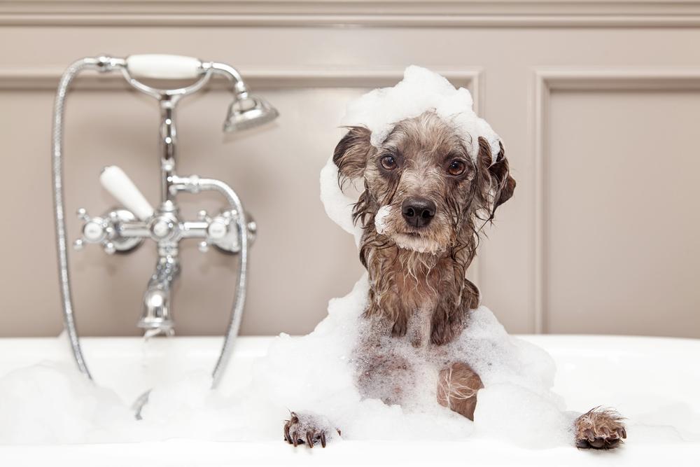 plumber drain clogs dog
